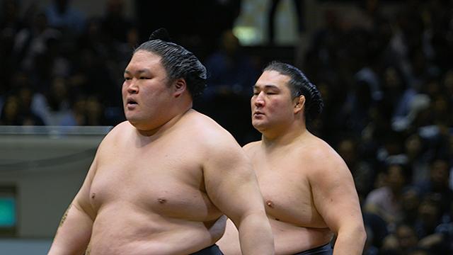 相撲道 サムライを継ぐ者たち 1週間限定